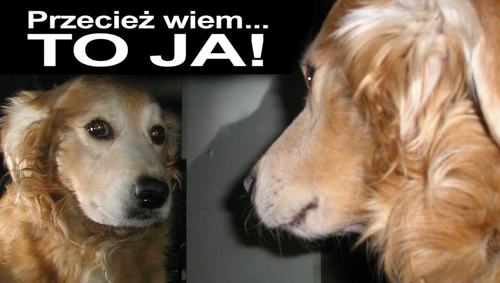 Pies patrzy w lustro - samoświadomość